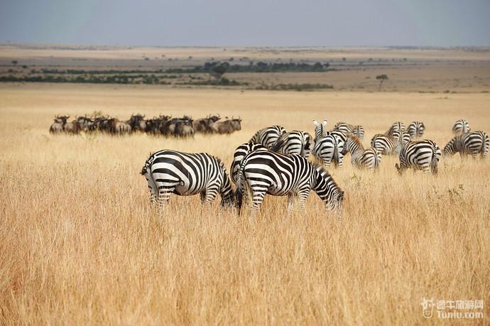 壮观的动物大迁徙