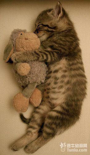 【美图欣赏】抓拍动物可爱睡姿 超慵懒啊