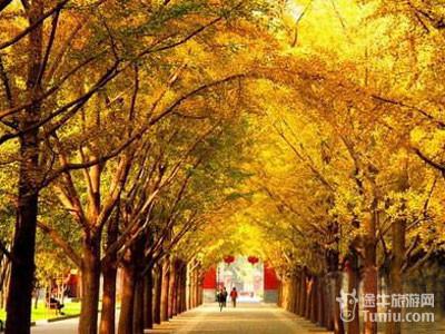 仰望那些参天大树,静赏北京的秋——2010年北京市内银