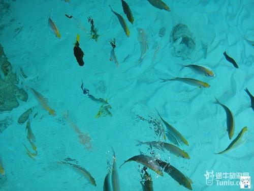 梦想岛 泳装壁纸