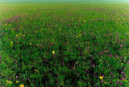 科尔沁草原 - 科尔沁草原的照片/包头/内蒙古