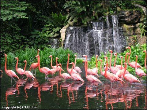 裕廊飞禽公园的照片/新加坡/亚洲