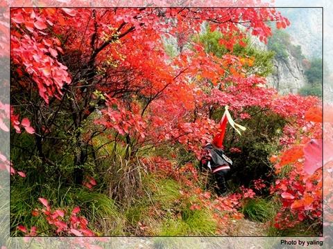 红叶树林3