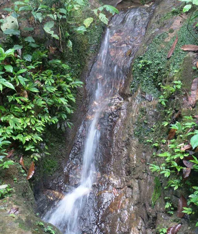 西双版纳原始森林公园 西双版纳 云南 200608311554571