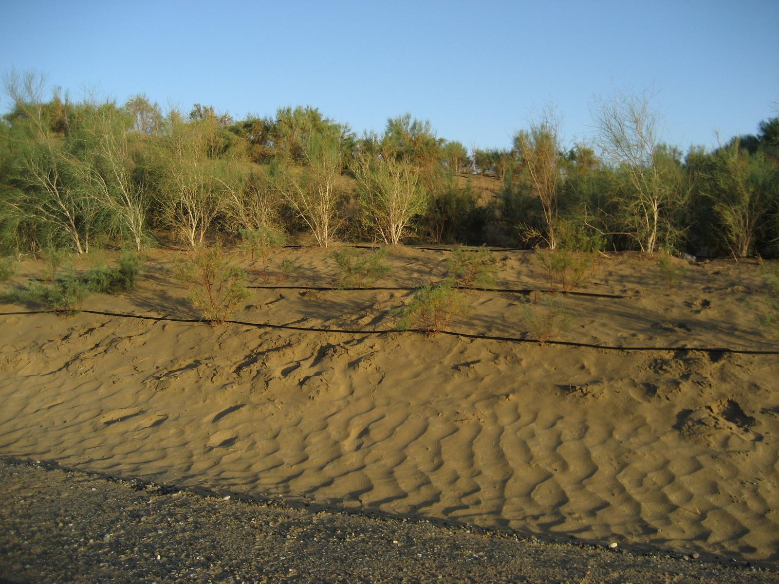 塔里木沙漠公路 和田 新疆