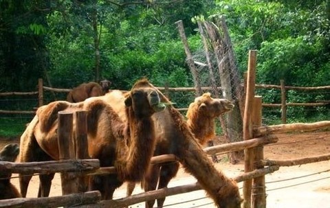 东山湖野生动物园3