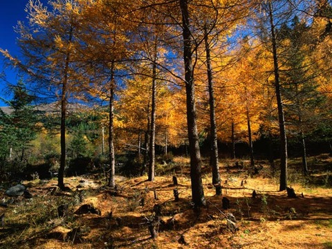 更多原始森林图片...