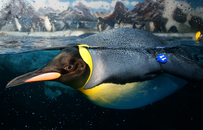 高清雪景海豚动物图片