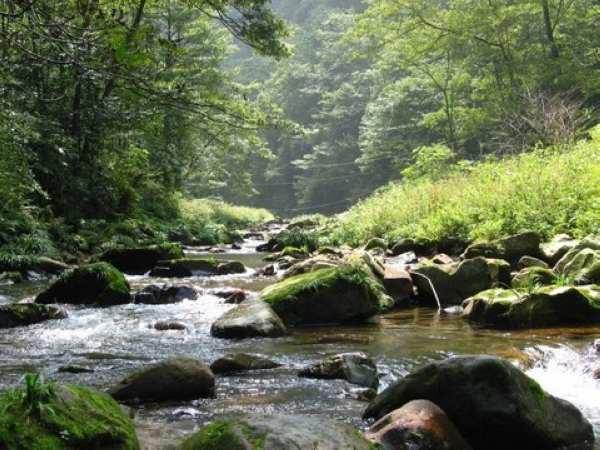 """漫步""""世界最美的峡谷"""" 【金鞭溪风景区】(游览时间大约1."""