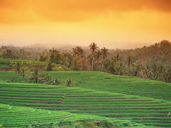 巴厘岛田园风光手机壁纸