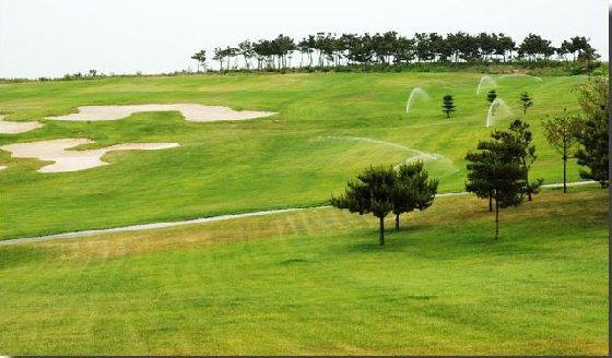 金湾高尔夫高清图片