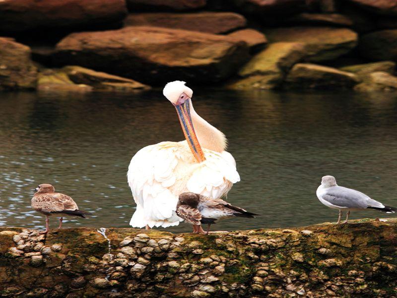 西霞口神雕山野生动物自然保护区