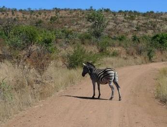 比林斯堡野生动物保护区的照片/南非
