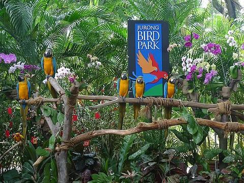 裕廊飞禽公园是亚太区最壮观的鸟类动物园之一
