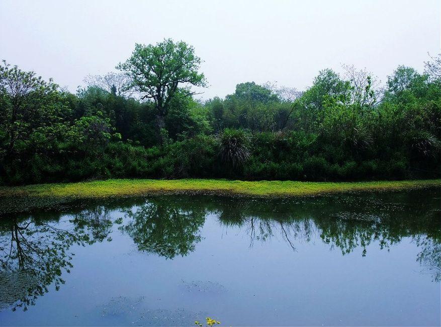 西溪湿地水彩 聚宝江湖古玩论坛