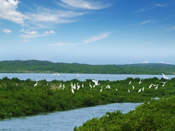 漳江口红树林保护区