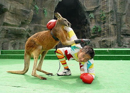 上海野生动物园1日游>大手拉小手