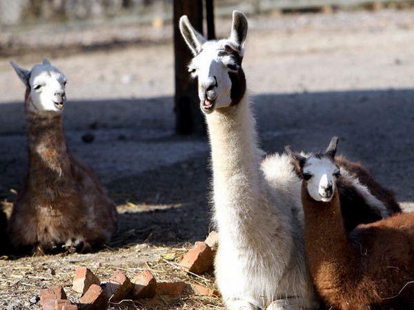 上海野生动物园1日游>含130元动物园门票