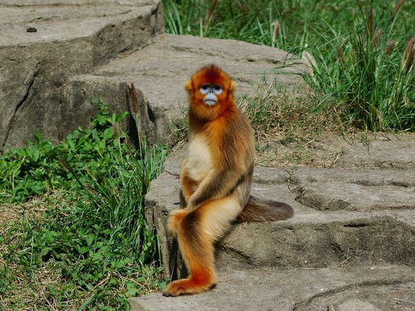 中国特有重点保护动物种群数量在世界野生动物园中