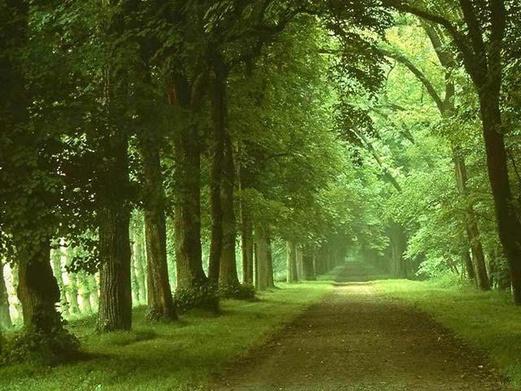 南京出发 山海天海滨浴场 森林公园2日游 宿森林公园,可升...