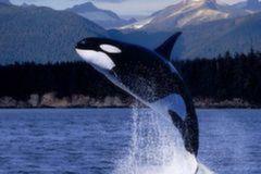 <北欧-冰岛13日游>早订多优惠,冰岛观鲸,峡湾游船,温泉,冰川